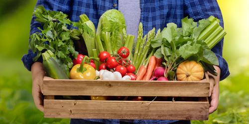 organic farming grow naturally